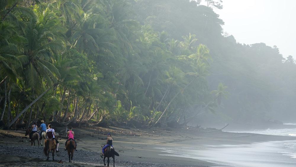 costa rica horseback trek rainforest